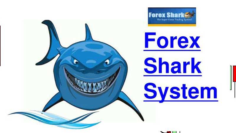 Revisión de Forex Shark